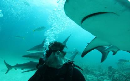 Leonardo DiCaprio a fost atacat de un rechin alb în timpul unei scufundări în Oceanul Atlantic