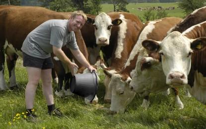 Cerere unica pentru subventia animalelor