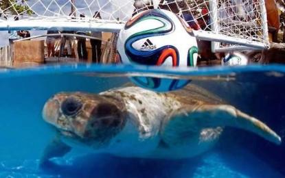"""Țestoasa Cabeção """"a prezis"""" că Brazilia va pierde diseară"""