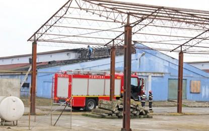 Peste 10.000 de pui salvaţi la Sanislău
