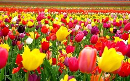 Ce flori înfloresc în luna mai