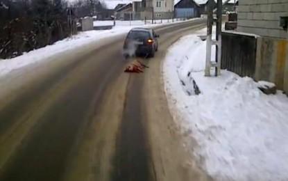 Cu porcul legat de maşină pe un drum judeţean