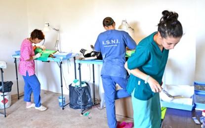 Sterilizare în masă la Adăpostul FreeLife Satu Mare
