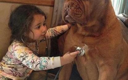 S-a inventat zgarda inteligentă, care îți arată cum se simte câinele tău și de ce are nevoie
